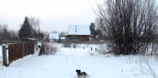 Перепуганные люди отогнали собак и вызвали правоохранителей. Иллюстративное фото: Svoboda.org