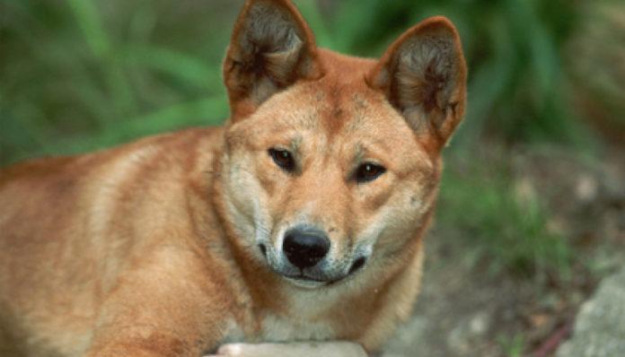 В Ульяновской области хотят разрешить охоту на собак. Фото: ptzgovorit.ru