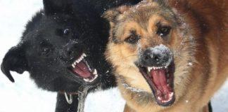 беспризорные собаки, бездомные собаки, стаи собак