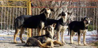 беспризорные животные, бездомные животные, собаки, стая собак
